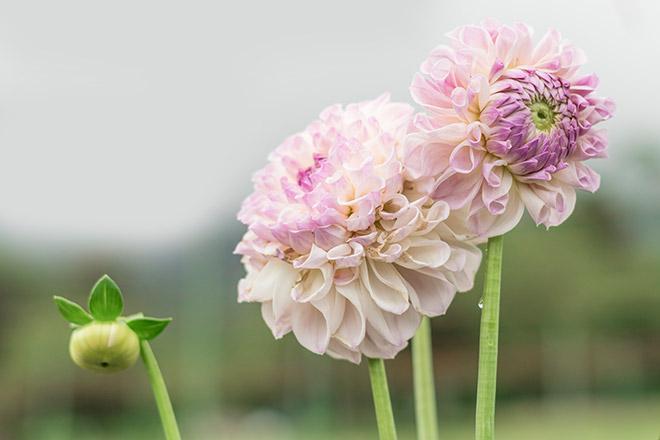 旬花咲く 黒姫高原