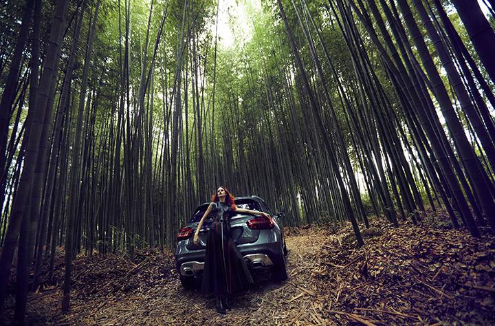 The Bamboo Shadows