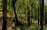 森の中を走るCLS