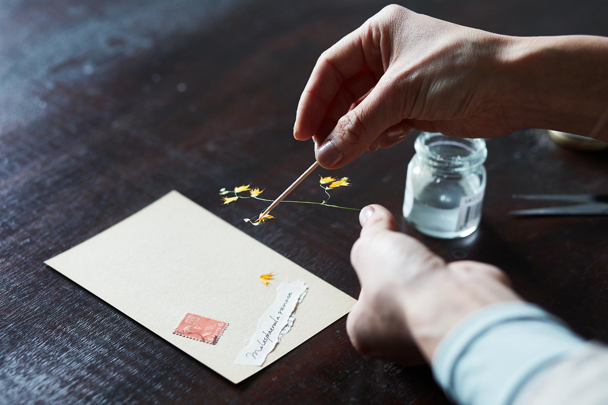 つまようじの先端で押し花にのりを塗布し、ポストカードに貼ります。フィルムでカバーするので、のりは少量でOK。